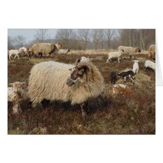 Sheep - Sheep in Heather field Card
