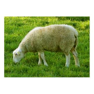 Sheep - Sheep Large Business Card