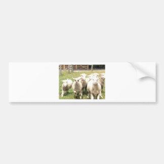 Sheep Stampede Bumper Sticker