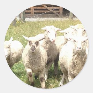 Sheep Stampede Classic Round Sticker