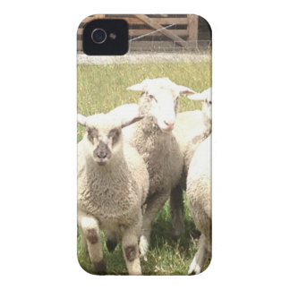 Sheep Stampede iPhone 4 Cover