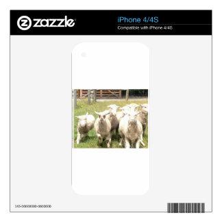 Sheep Stampede iPhone 4S Skin