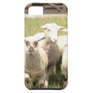 Sheep Stampede iPhone SE/5/5s Case