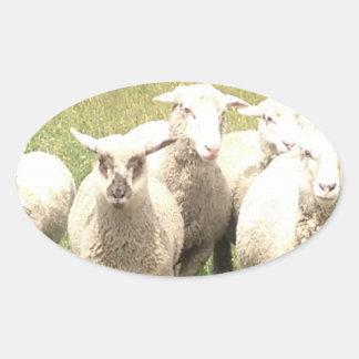 Sheep Stampede Oval Sticker