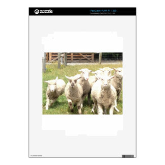 Sheep Stampede Skins For The iPad 2