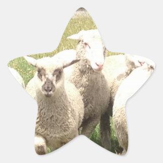Sheep Stampede Star Sticker