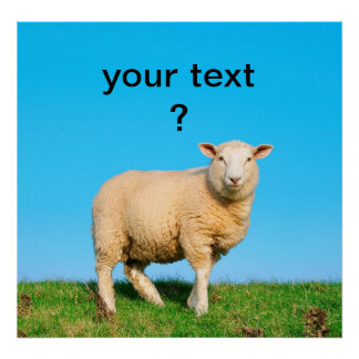 Sheep standing on seawall poster