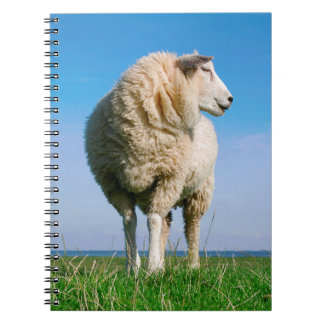 Sheep standing on seawall spiral note book