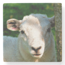 SHEEP STONE COASTER