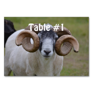 Sheep Table Cards