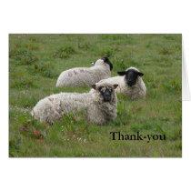 Sheep Thank-you Card
