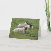 Sheep Thank-you Thank You Card