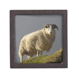 Sheep, Trotternish Peninsula, Isle of Skye, Keepsake Box