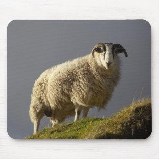Sheep, Trotternish Peninsula, Isle of Skye, Mouse Pad
