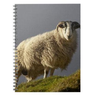 Sheep, Trotternish Peninsula, Isle of Skye, Notebook