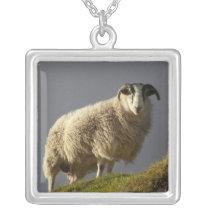 Sheep, Trotternish Peninsula, Isle of Skye, Silver Plated Necklace