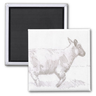 sheep walking pencil sketch 2 inch square magnet