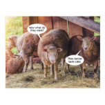 Sheep Want Cake Funny Postcard