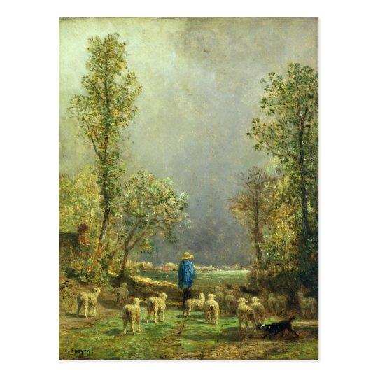 Sheep watching a Storm Postcard
