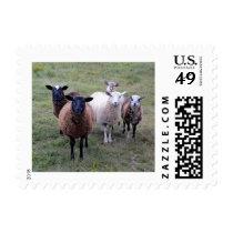 Sheep Welcoming Committee Postage