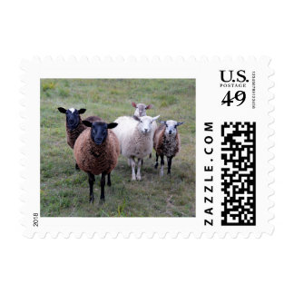 Sheep Welcoming Committee Postage