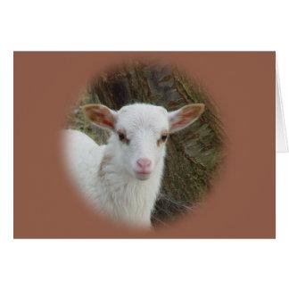 Sheep - White Lamb Card