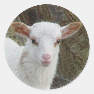 Sheep - White Lamb Classic Round Sticker