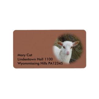 Sheep - White Lamb Label