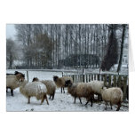 Sheep - Winter season Card