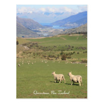 Sheep with a view, Queenstown NZ - Postcard