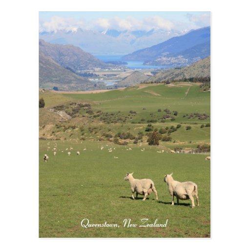 Sheep with a view, Queenstown NZ - Postcard Postcards