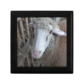 Sheep with hay gift box