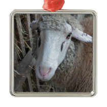 Sheep with hay metal ornament