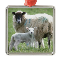 Sheep with her lamb metal ornament