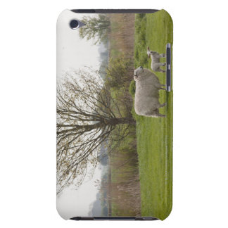 Sheep with lamb in field barely there iPod cover