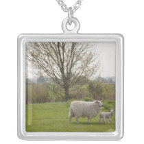 Sheep with lamb in field silver plated necklace