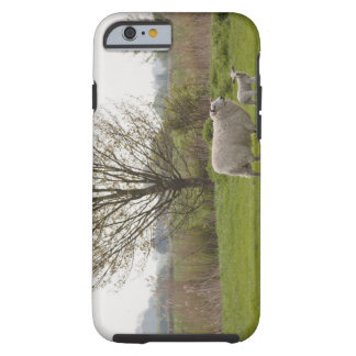 Sheep with lamb in field tough iPhone 6 case