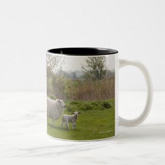 Sheep with lamb in field Two-Tone coffee mug