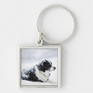 Sheepdog (Akbash/collie mix) lying out during Silver-Colored Square Keychain