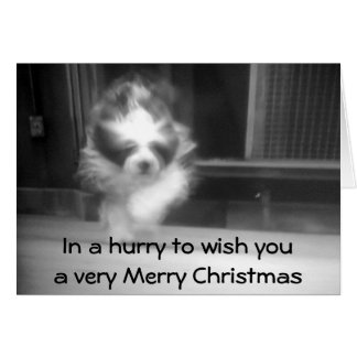 SHEEPDOG CHRISTMAS WISHES CARD