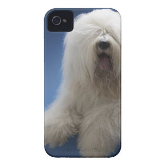 Sheepdog iPhone 4 Cover