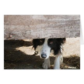 Sheepdog on farm in Birstwith Card