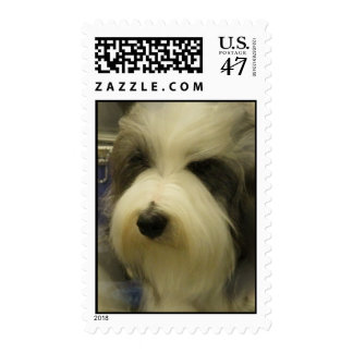 Sheepdog Picture Postage Stamp