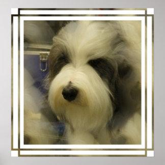 Sheepdog Picture Print