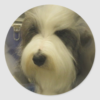 Sheepdog Picture Stickers