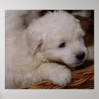 Sheepdog Puppy (customizable) Poster