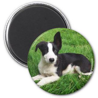 Sheepdog Puppy Magnet