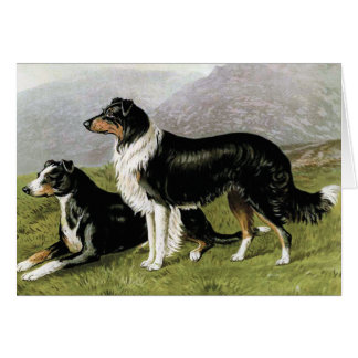 """Sheepdogs"" Vintage Dog Illustration Card"
