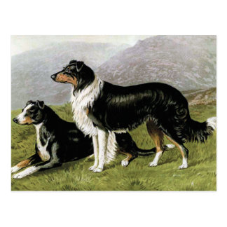 """Sheepdogs"" Vintage Dog Illustration Postcard"