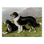 """Sheepdogs"" Vintage Dog Illustration Print"